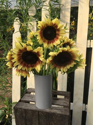Sunflowers - a dozen cut stems